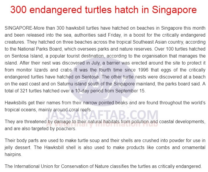 Birth of Endangered turtle in Singapur