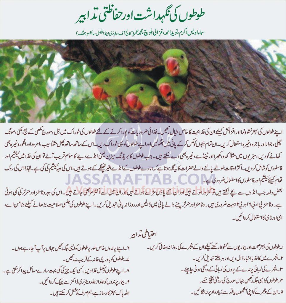 Parrots Care and Management