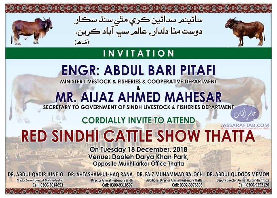 Red Sindhi Cattle Show Sindh