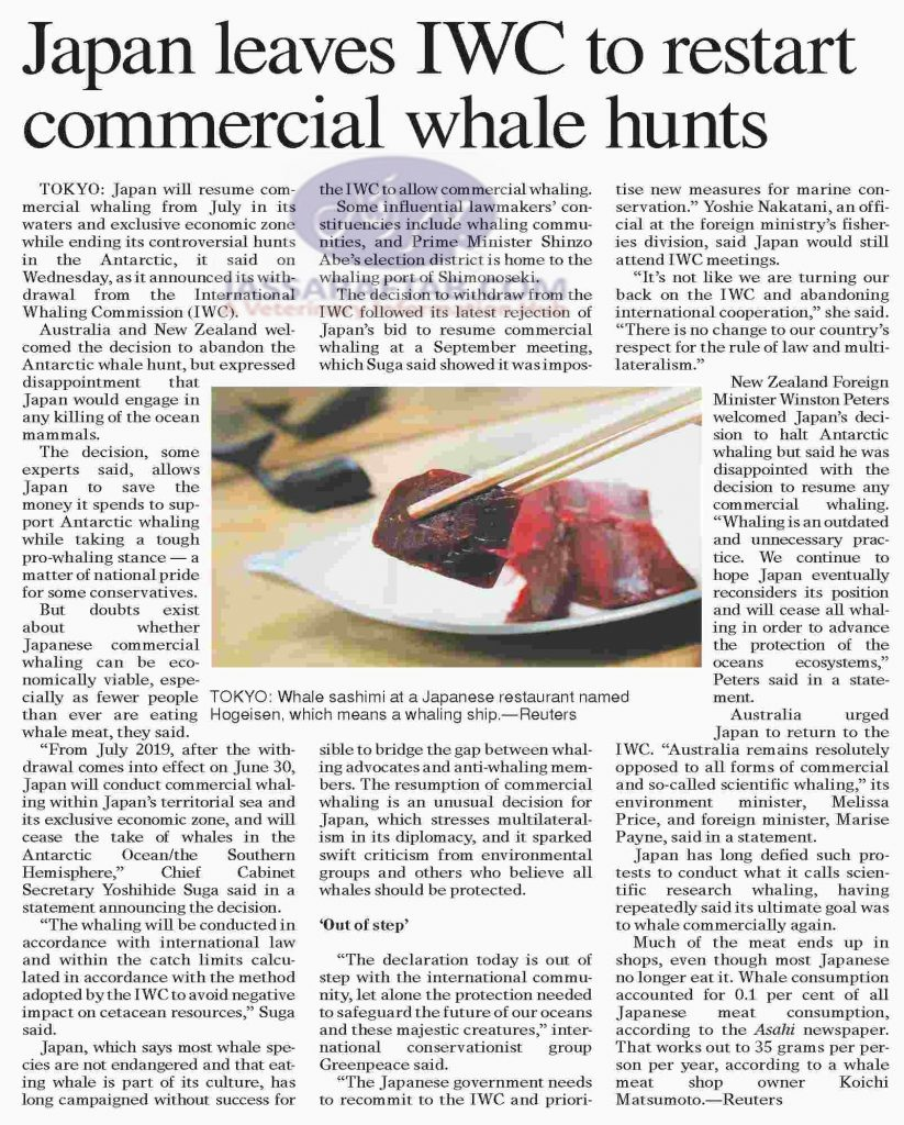 Commercial whale hunts
