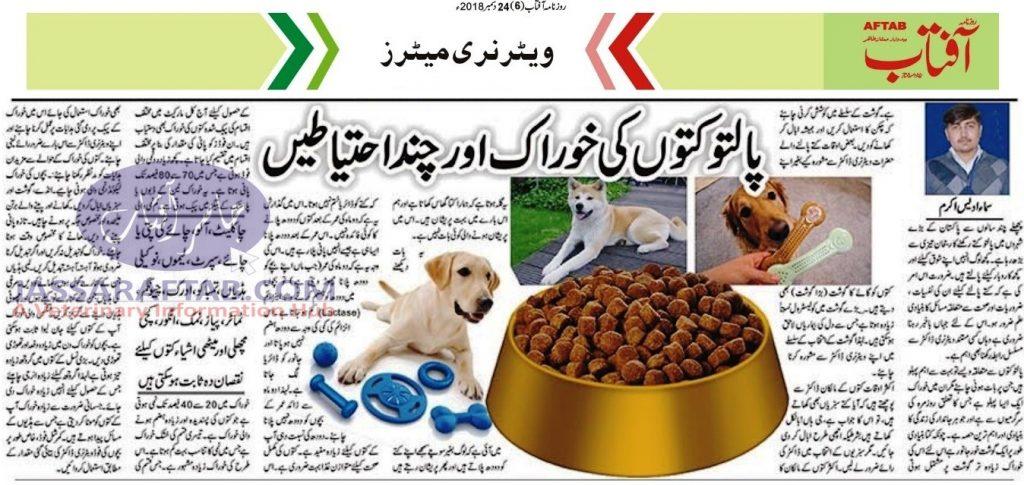 Dog Feed and Precautions