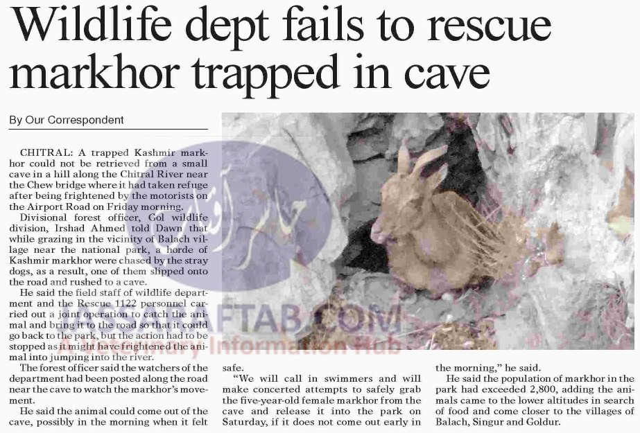 Wildlife department fails to rescue markhor trapped in cave
