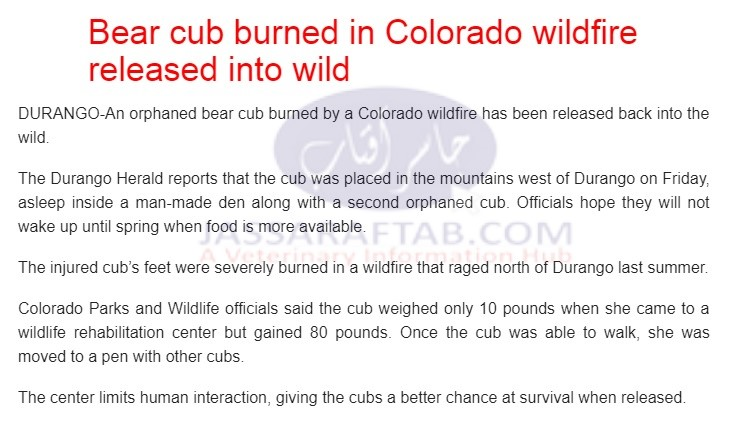Bear cub burnt with wildfire