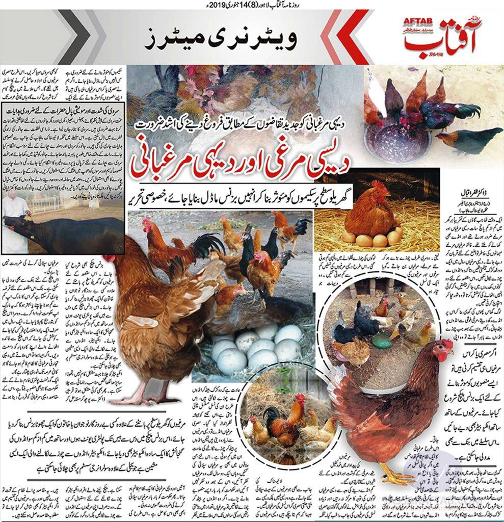 Dehi Murghabani - Desi Poultry Farming