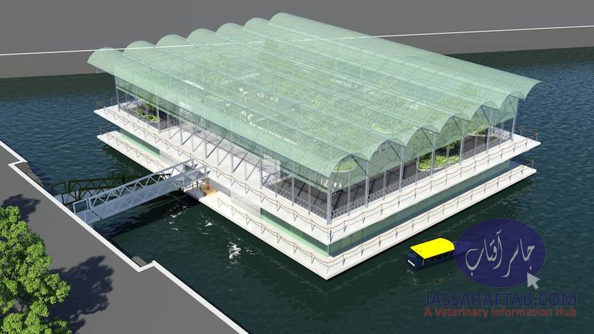 Floating Dairy Farm on Water