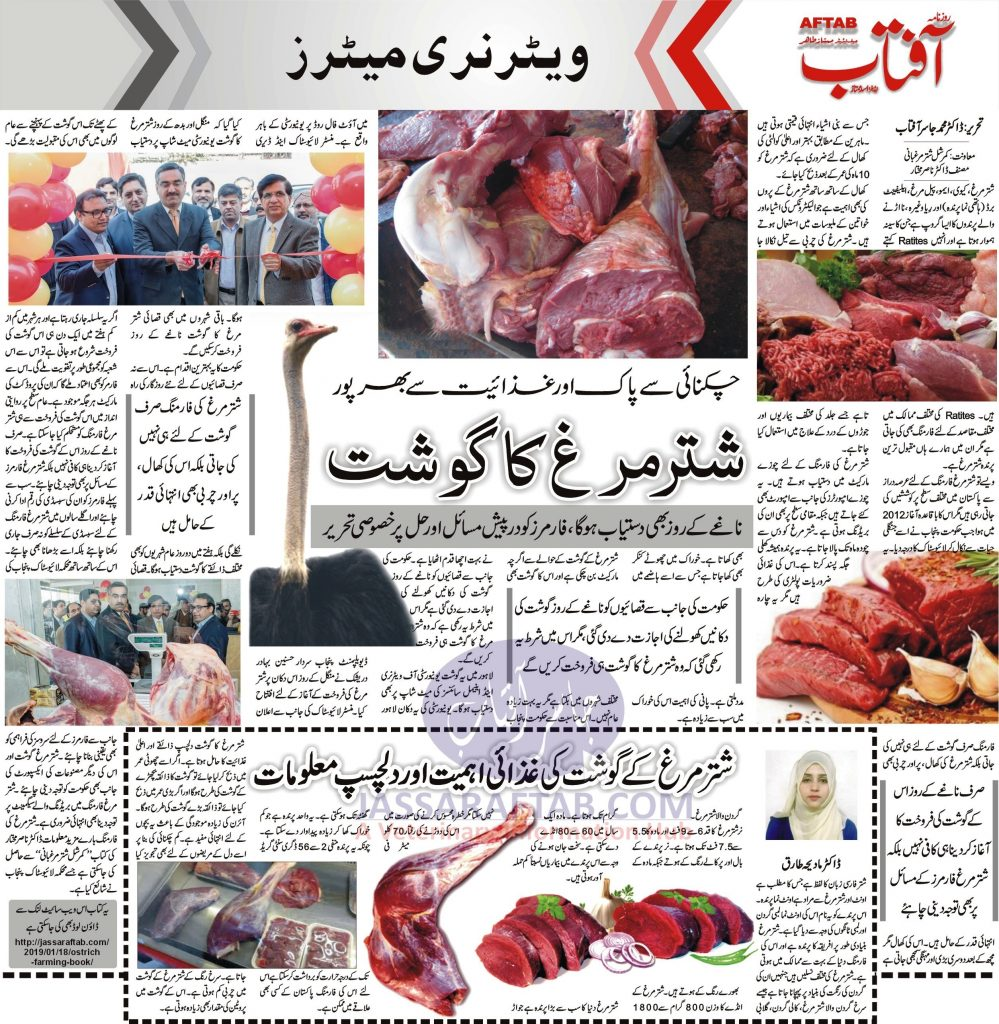 ostrich meat availability