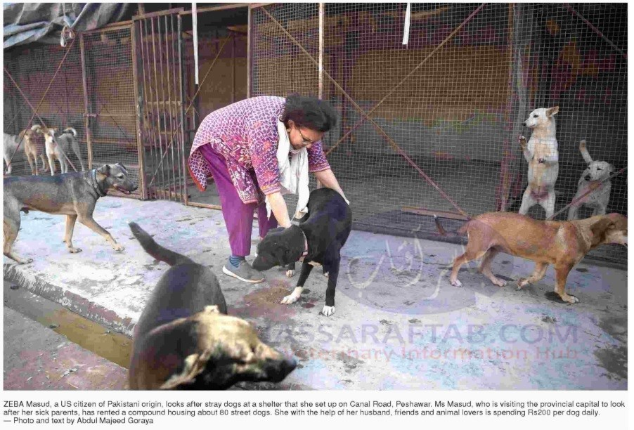 Shelter for stray dogs