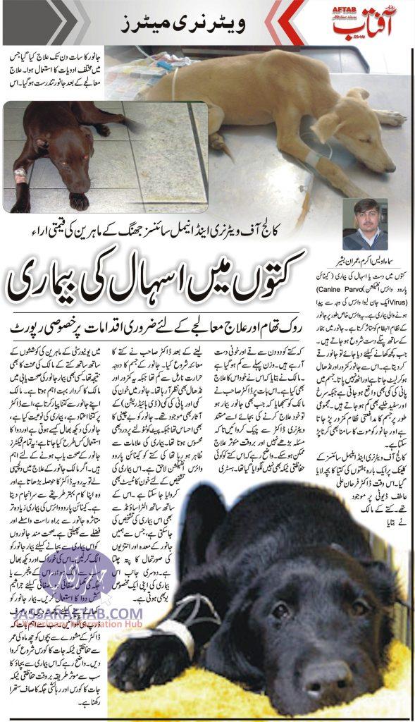 Canine Parvo Virus in Pakistan Success Story