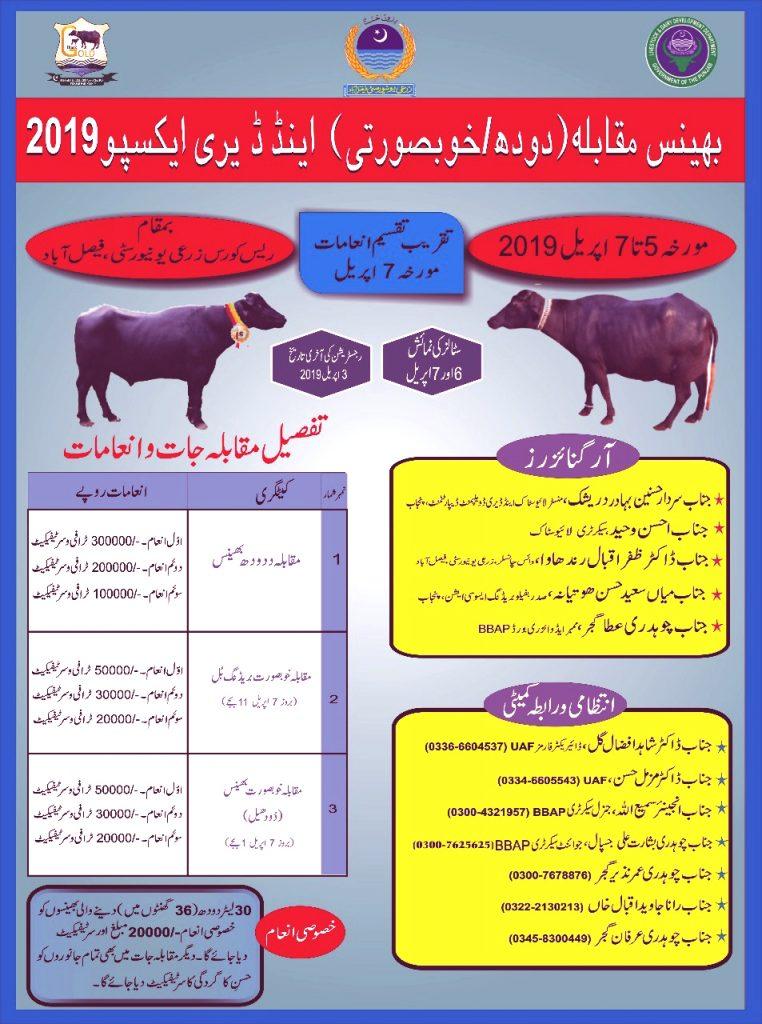 Dairy Expo Buffalo Compeition
