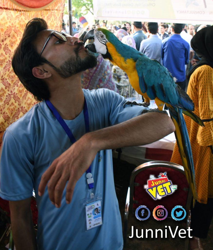 Kissing Cocktail Parrot
