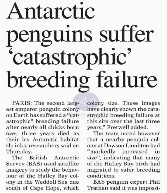 Penguins breeding failure