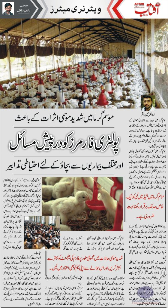 Disease of Poultry in Summer
