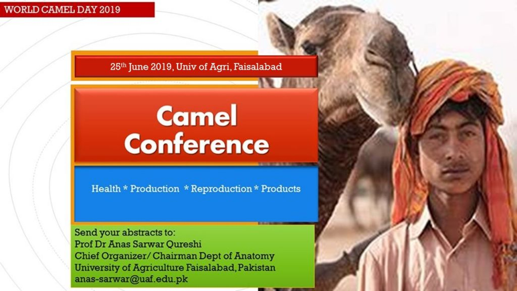 Camel Conference