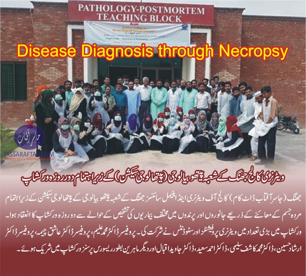 veterinary Diagnosis by Necropsy