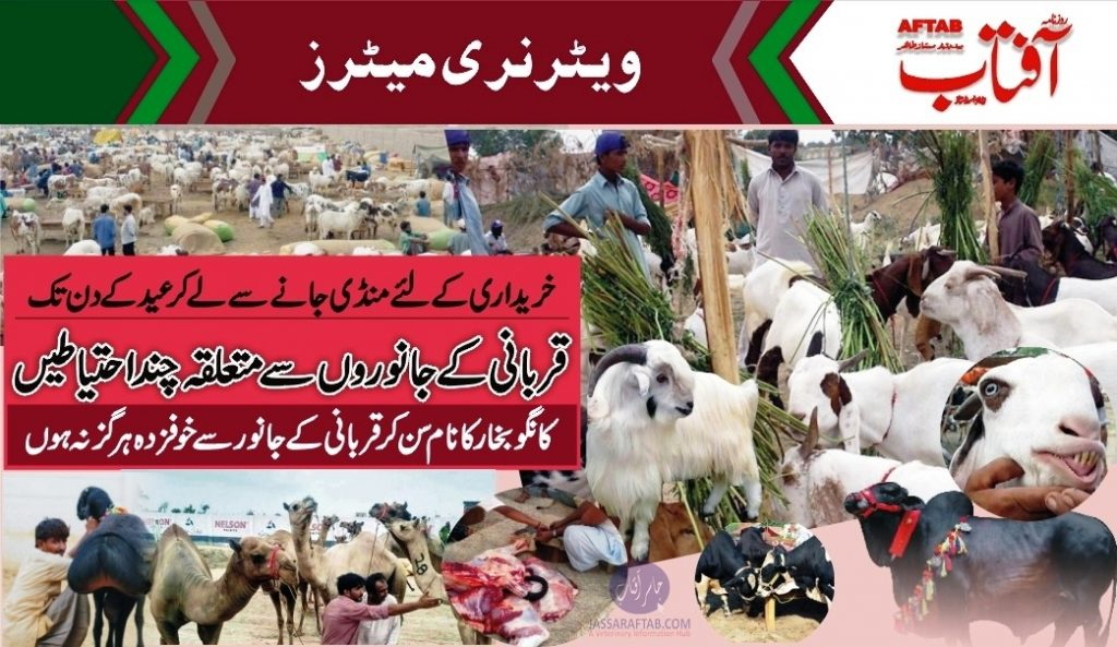 Care of Qurbani Animals and Slaughtering Instruction
