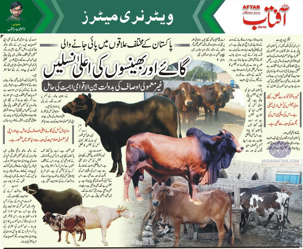 Potential of Pakistani buffalo and cow