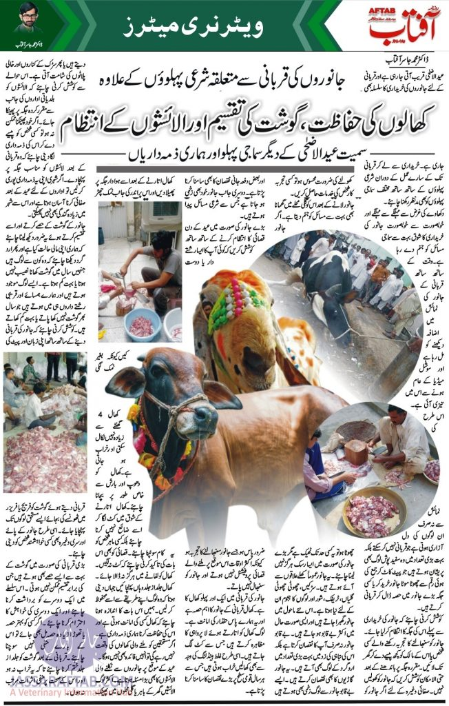 Qurbani Animals Slaughtering and Meat Pieces