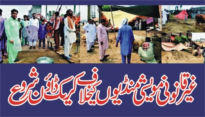 Crack down against illegal cattle markets