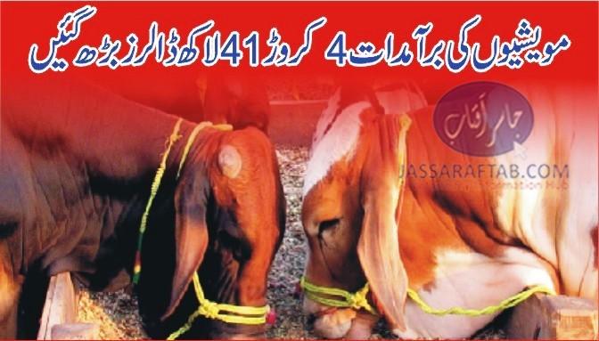 Livestock exports
