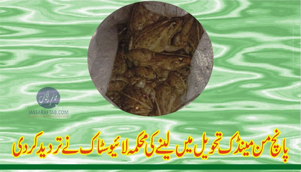Frog meat in Lahore