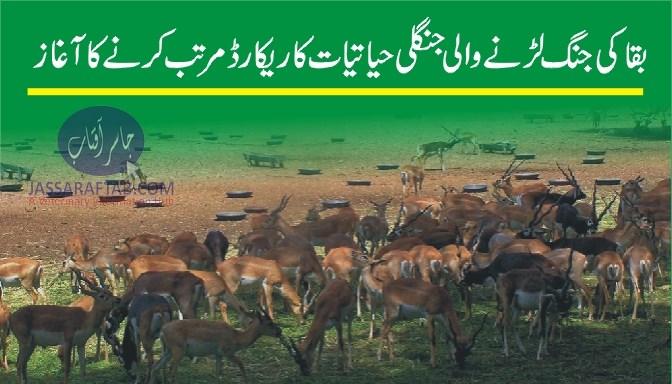 Protection of  wild animals