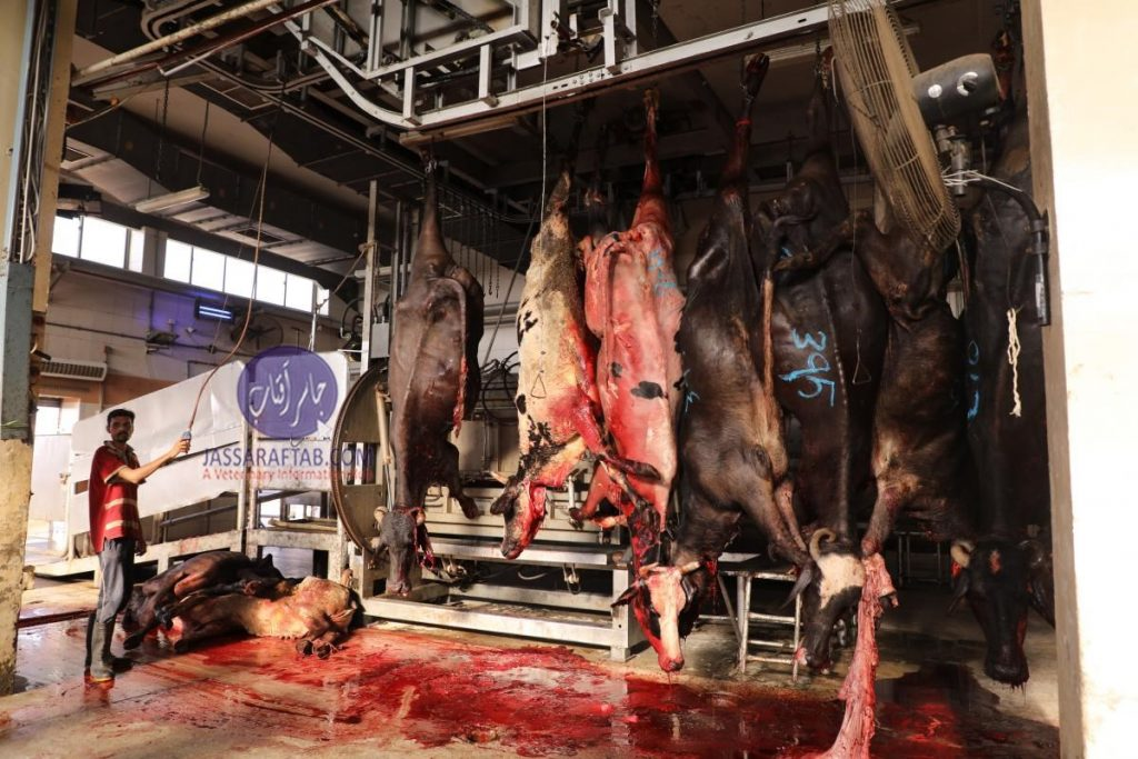 Inspection of slaughter houses