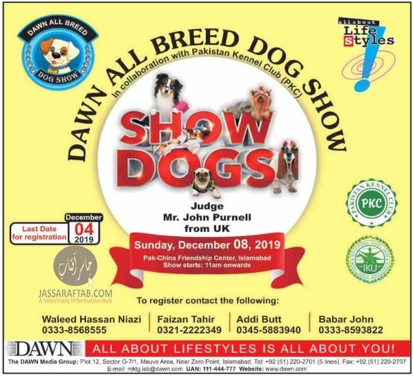 Dawn all breed  dog show