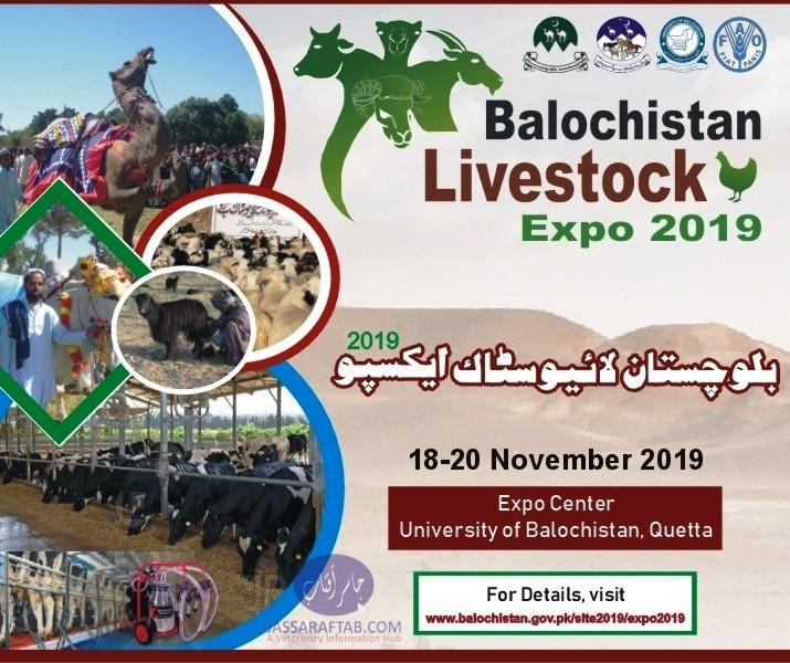 Livestock Expo Quetta