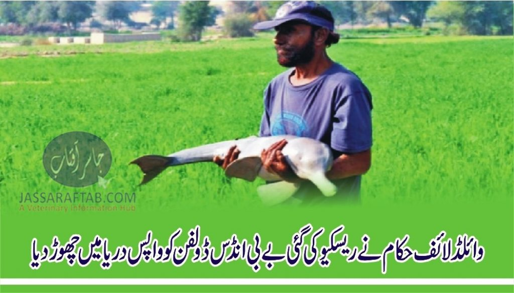 Baby Indus dolphin rescued after three-day operation