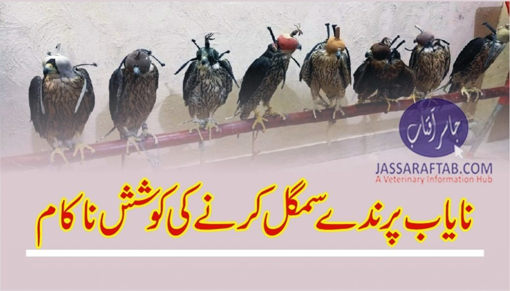 Rangers seized expensive falcons and foiled a smuggling