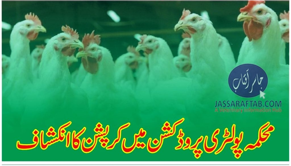 Corruption in department of poultry production
