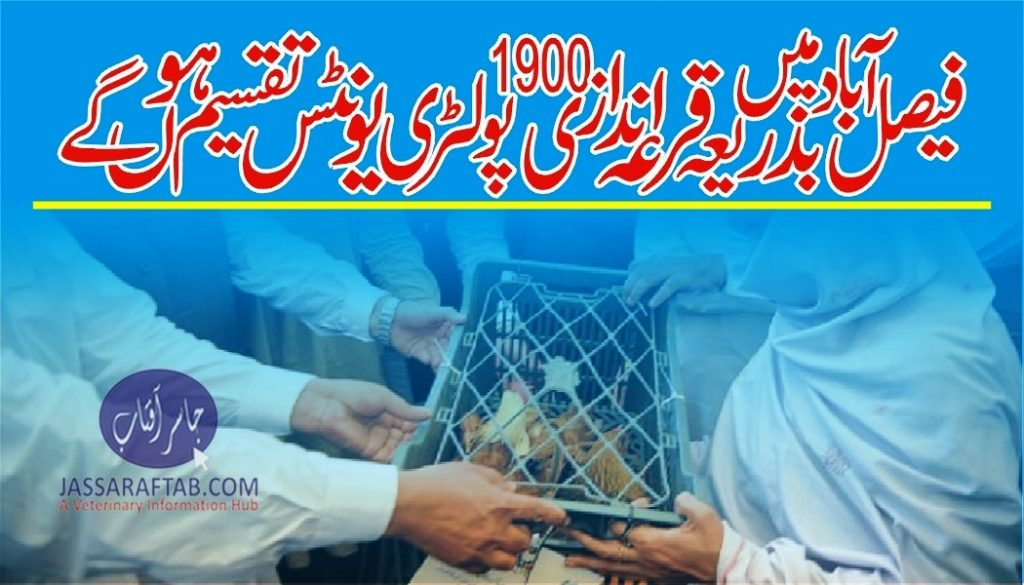 Poultry units distribution in Faisalabad