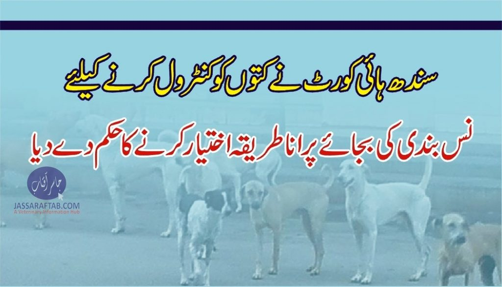 stop nuetering stray dogs