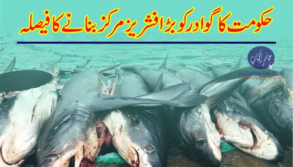 Fisheries center in gwadar