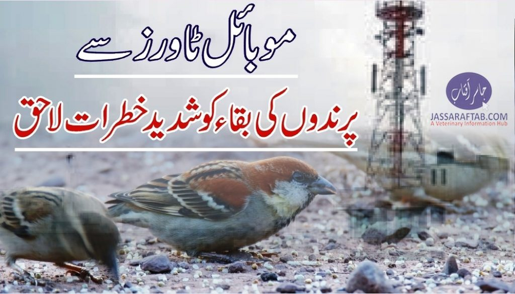 Birds dying because of cell phone towers radiation