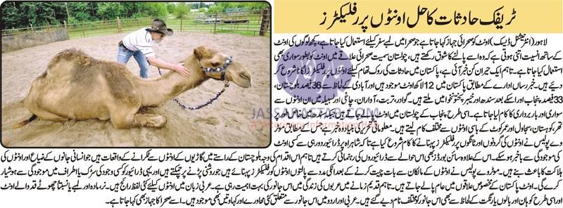 Reflectors on camels