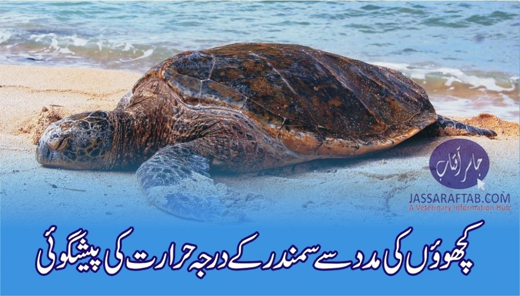 Sea turtles help predict ocean temperature change