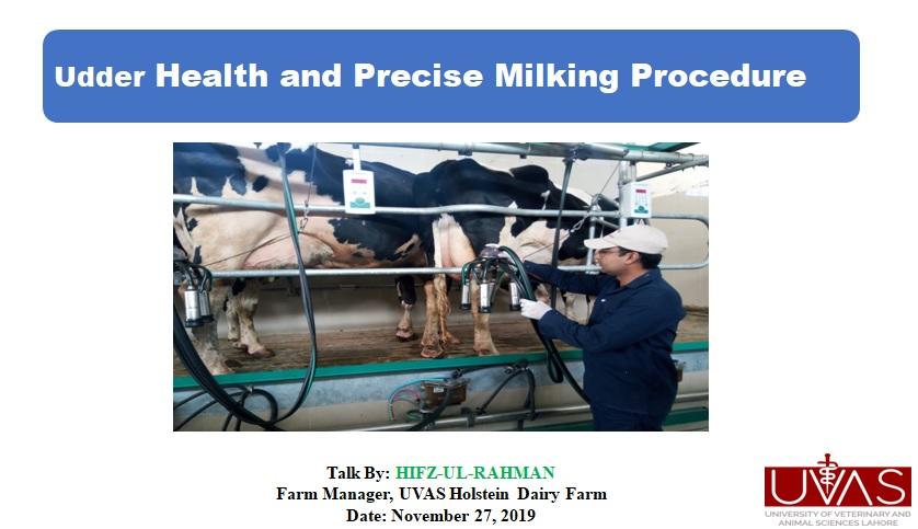 udder healt management at Holstein Frisian farm