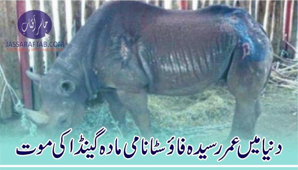 World oldest rhino died