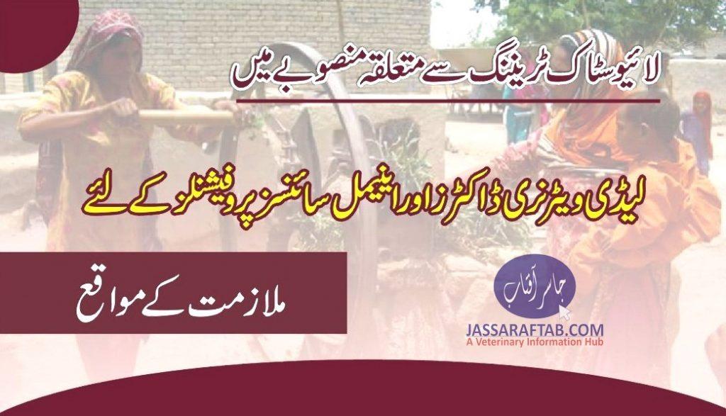 Female Veterinarian Job