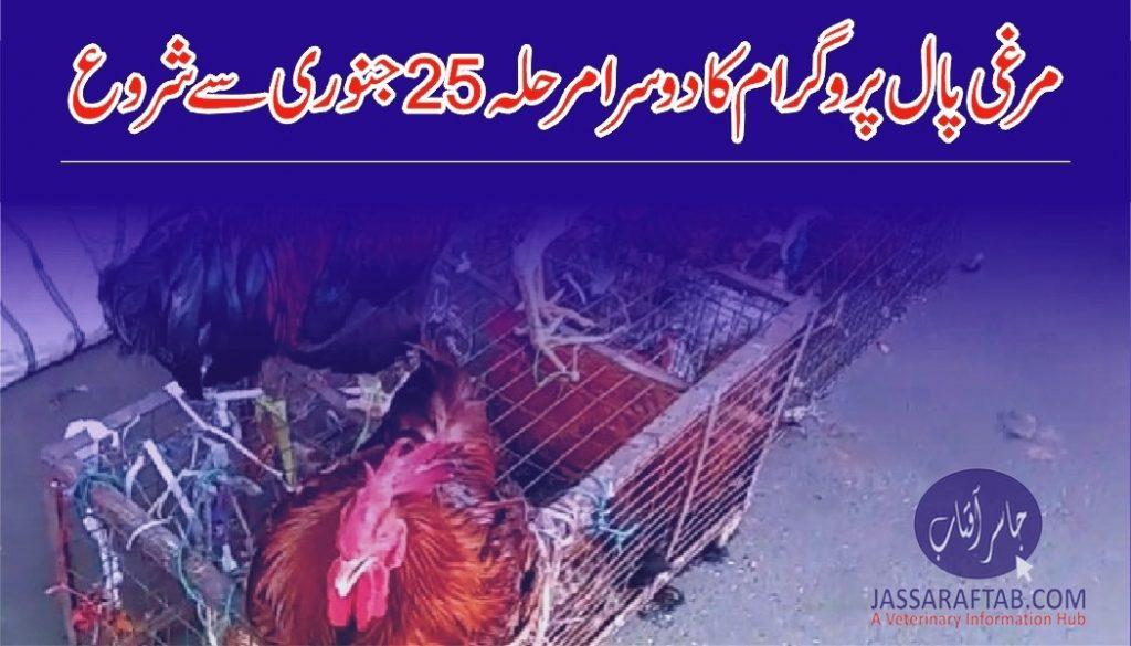 Poultry distribution scheme