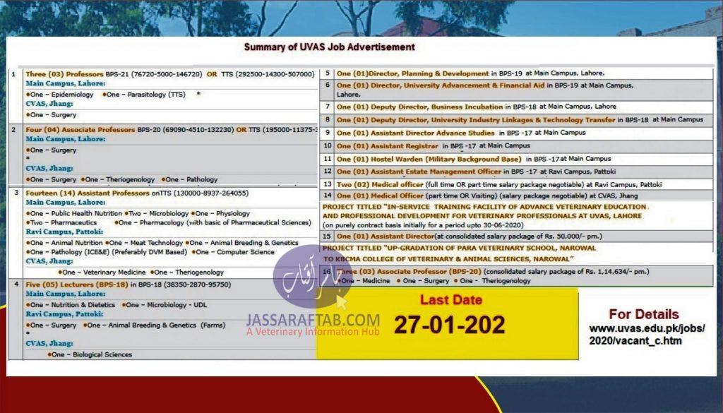 DVM University Jobs