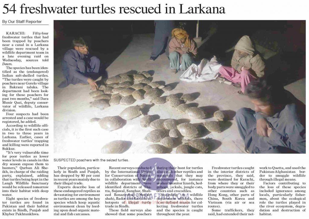 Freshwater turtle rescued in Larkana