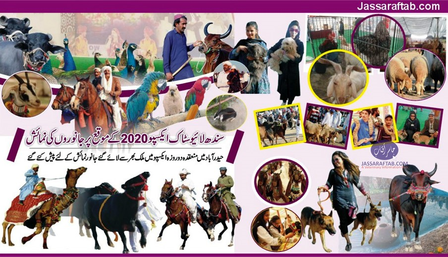 Sindh Expo Hyderabad Birds Show Pets
