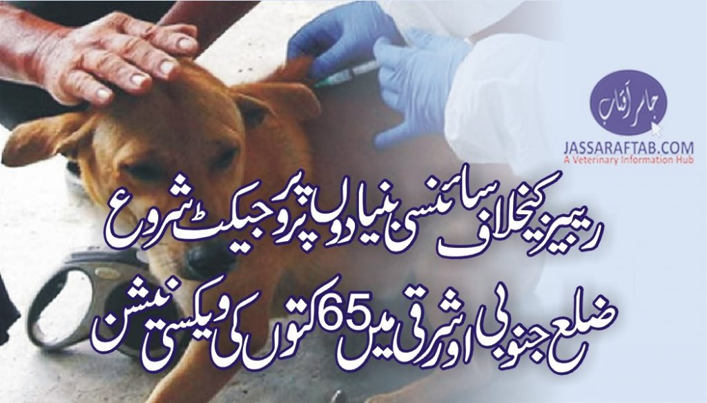 Vaccination of stray dogs started