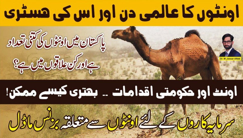 camel day history