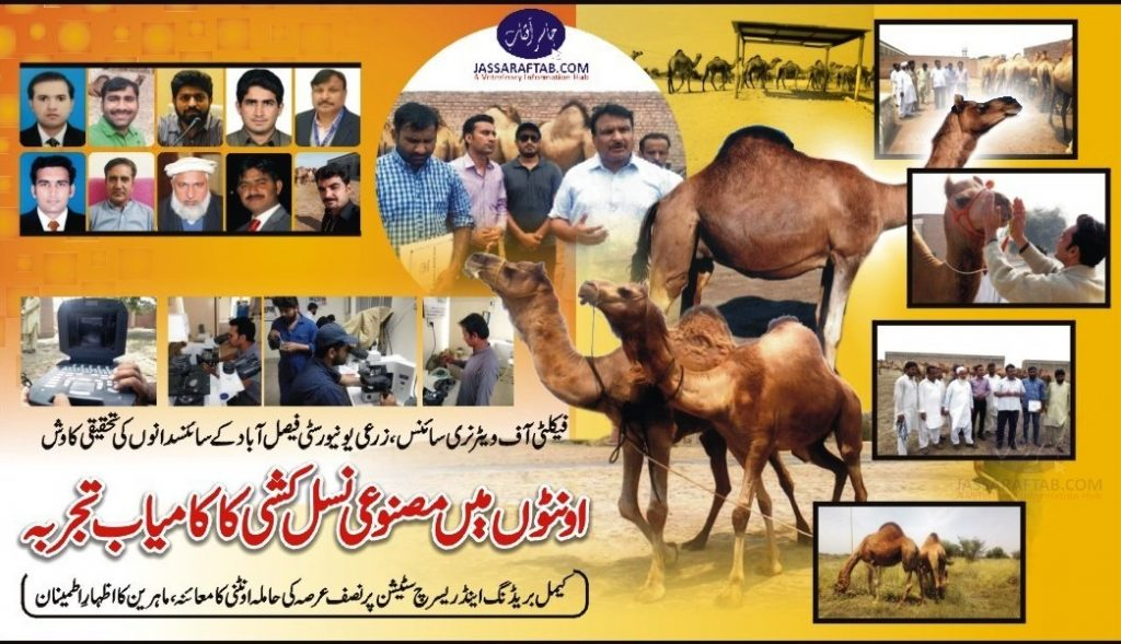 artificial insemination in Camel