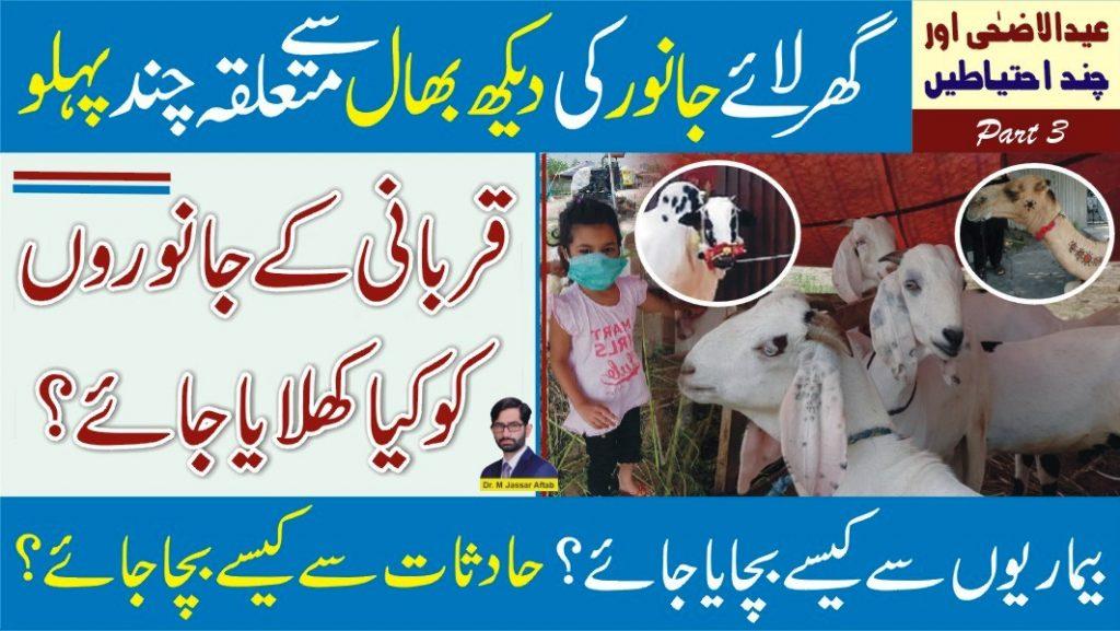 Care and Feeding of Qurbani Animals