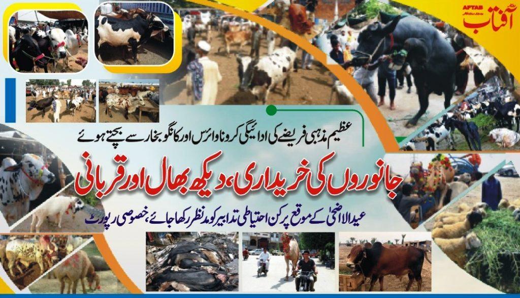 Qurbani Animals Feeding and management