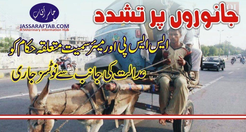 cruelty to animals case